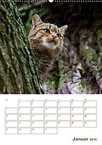 Europäische Wildkatzen - Jahresplaner (Wandkalender 2019 DIN A2 hoch) - Produktdetailbild 1