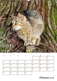 Europäische Wildkatzen - Jahresplaner (Wandkalender 2019 DIN A2 hoch) - Produktdetailbild 2