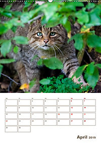 Europäische Wildkatzen - Jahresplaner (Wandkalender 2019 DIN A2 hoch) - Produktdetailbild 4