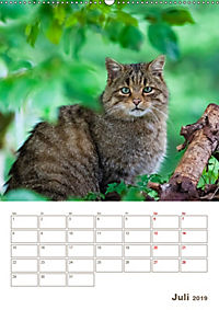 Europäische Wildkatzen - Jahresplaner (Wandkalender 2019 DIN A2 hoch) - Produktdetailbild 7