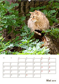 Europäische Wildkatzen - Jahresplaner (Wandkalender 2019 DIN A2 hoch) - Produktdetailbild 5