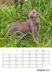 Europäische Wildkatzen - Jahresplaner (Wandkalender 2019 DIN A2 hoch) - Produktdetailbild 8