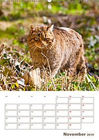 Europäische Wildkatzen - Jahresplaner (Wandkalender 2019 DIN A2 hoch) - Produktdetailbild 11