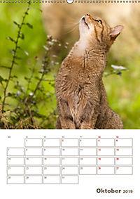 Europäische Wildkatzen - Jahresplaner (Wandkalender 2019 DIN A2 hoch) - Produktdetailbild 10