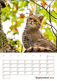 Europäische Wildkatzen - Jahresplaner (Wandkalender 2019 DIN A2 hoch) - Produktdetailbild 9
