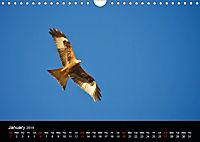 EUROPEAN BIRDS of PREY (Wall Calendar 2019 DIN A4 Landscape) - Produktdetailbild 1