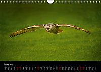 EUROPEAN BIRDS of PREY (Wall Calendar 2019 DIN A4 Landscape) - Produktdetailbild 5