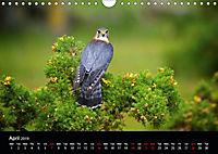 EUROPEAN BIRDS of PREY (Wall Calendar 2019 DIN A4 Landscape) - Produktdetailbild 4