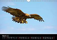 EUROPEAN BIRDS of PREY (Wall Calendar 2019 DIN A4 Landscape) - Produktdetailbild 3