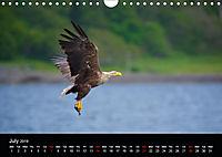 EUROPEAN BIRDS of PREY (Wall Calendar 2019 DIN A4 Landscape) - Produktdetailbild 7