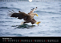 EUROPEAN BIRDS of PREY (Wall Calendar 2019 DIN A4 Landscape) - Produktdetailbild 11