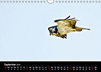 EUROPEAN BIRDS of PREY (Wall Calendar 2019 DIN A4 Landscape) - Produktdetailbild 9