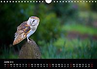 EUROPEAN BIRDS of PREY (Wall Calendar 2019 DIN A4 Landscape) - Produktdetailbild 6
