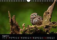 EUROPEAN BIRDS of PREY (Wall Calendar 2019 DIN A4 Landscape) - Produktdetailbild 8