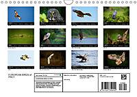 EUROPEAN BIRDS of PREY (Wall Calendar 2019 DIN A4 Landscape) - Produktdetailbild 13