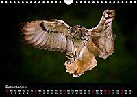 EUROPEAN BIRDS of PREY (Wall Calendar 2019 DIN A4 Landscape) - Produktdetailbild 12