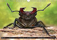 European Insects (Wall Calendar 2019 DIN A4 Landscape) - Produktdetailbild 5