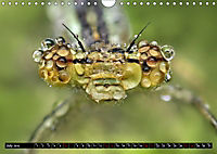 European Insects (Wall Calendar 2019 DIN A4 Landscape) - Produktdetailbild 7