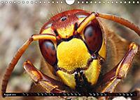 European Insects (Wall Calendar 2019 DIN A4 Landscape) - Produktdetailbild 8