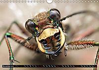 European Insects (Wall Calendar 2019 DIN A4 Landscape) - Produktdetailbild 11
