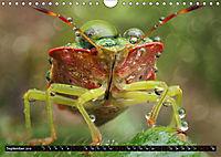 European Insects (Wall Calendar 2019 DIN A4 Landscape) - Produktdetailbild 9
