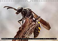 European Insects (Wall Calendar 2019 DIN A4 Landscape) - Produktdetailbild 12