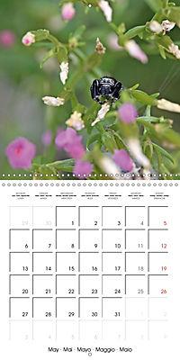 European Spiders (Wall Calendar 2019 300 × 300 mm Square) - Produktdetailbild 5
