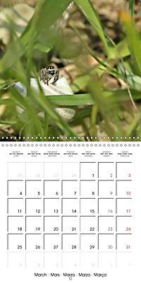 European Spiders (Wall Calendar 2019 300 × 300 mm Square) - Produktdetailbild 3