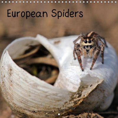 European Spiders (Wall Calendar 2019 300 × 300 mm Square), Christine Schmutzler-Schaub