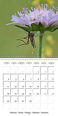 European Spiders (Wall Calendar 2019 300 × 300 mm Square) - Produktdetailbild 2