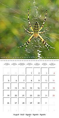 European Spiders (Wall Calendar 2019 300 × 300 mm Square) - Produktdetailbild 8