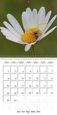 European Spiders (Wall Calendar 2019 300 × 300 mm Square) - Produktdetailbild 4