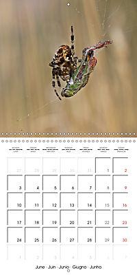 European Spiders (Wall Calendar 2019 300 × 300 mm Square) - Produktdetailbild 6