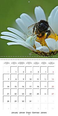 European Spiders (Wall Calendar 2019 300 × 300 mm Square) - Produktdetailbild 1