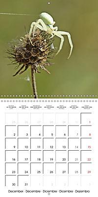 European Spiders (Wall Calendar 2019 300 × 300 mm Square) - Produktdetailbild 12