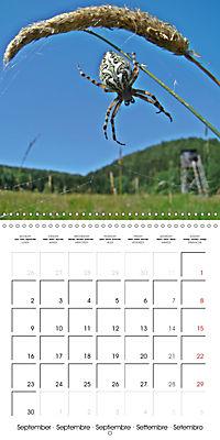 European Spiders (Wall Calendar 2019 300 × 300 mm Square) - Produktdetailbild 9