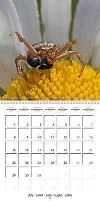 European Spiders (Wall Calendar 2019 300 × 300 mm Square) - Produktdetailbild 7