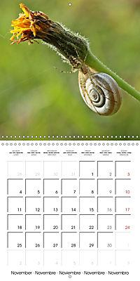 European Spiders (Wall Calendar 2019 300 × 300 mm Square) - Produktdetailbild 11