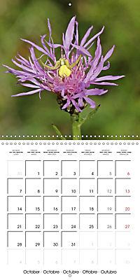 European Spiders (Wall Calendar 2019 300 × 300 mm Square) - Produktdetailbild 10
