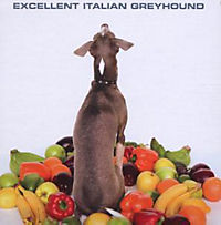 Excellent Italian Greyhound - Produktdetailbild 1