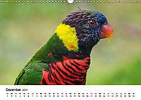 Exotische Vögel im Porträt (Wandkalender 2019 DIN A3 quer) - Produktdetailbild 4
