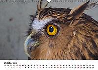 Exotische Vögel im Porträt (Wandkalender 2019 DIN A3 quer) - Produktdetailbild 6