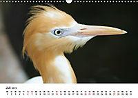 Exotische Vögel im Porträt (Wandkalender 2019 DIN A3 quer) - Produktdetailbild 11