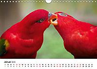Exotische Vögel im Porträt (Wandkalender 2019 DIN A4 quer) - Produktdetailbild 1