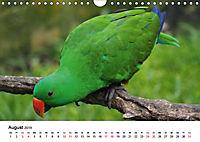 Exotische Vögel im Porträt (Wandkalender 2019 DIN A4 quer) - Produktdetailbild 8