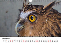 Exotische Vögel im Porträt (Wandkalender 2019 DIN A4 quer) - Produktdetailbild 10