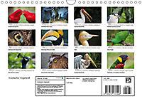Exotische Vögel im Porträt (Wandkalender 2019 DIN A4 quer) - Produktdetailbild 13