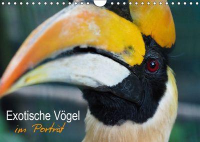 Exotische Vögel im Porträt (Wandkalender 2019 DIN A4 quer), Christina Williger