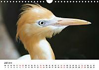 Exotische Vögel im Porträt (Wandkalender 2019 DIN A4 quer) - Produktdetailbild 7