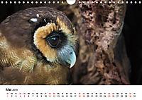Exotische Vögel im Porträt (Wandkalender 2019 DIN A4 quer) - Produktdetailbild 5